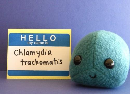 chalmydia plush toy